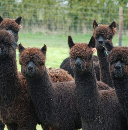 Favourite Used- Weanling heads - profile pic